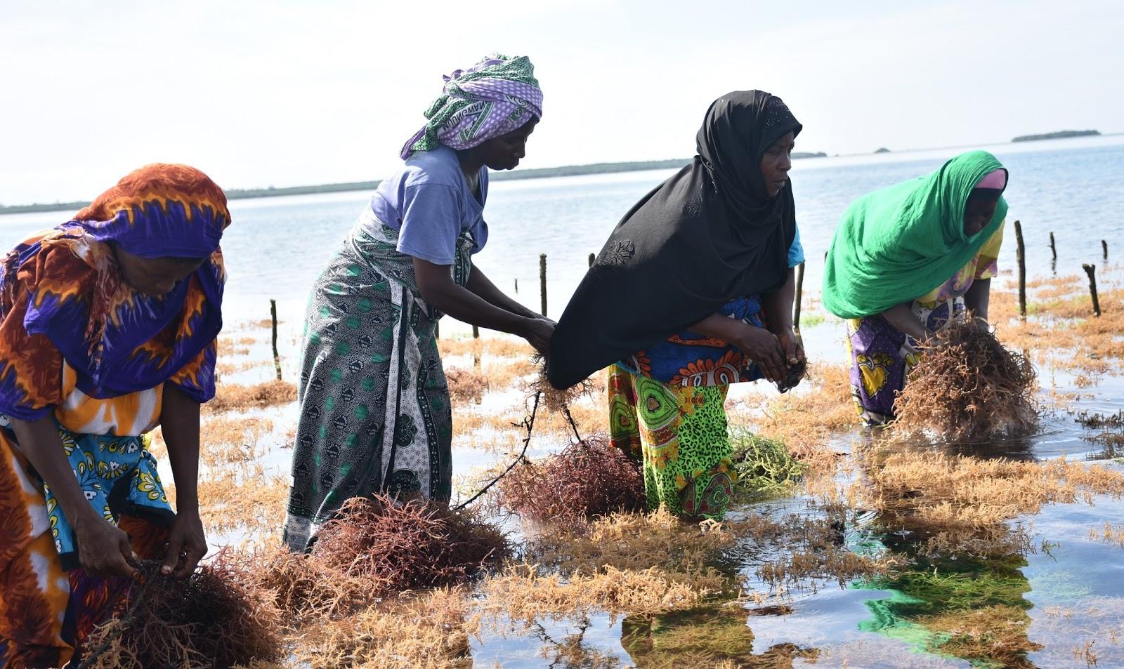 Kibuyuni-Seaweed-Farmers